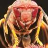 Katil arılar operasyonu