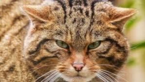 Kediler Dünya'ya Nasıl Hakim Oldu ?