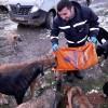 İBB, soğuk havalarda sokak hayvanlarını da unutmadı