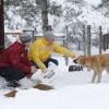 Sokak Hayvanlarına Yemleme Çalışması