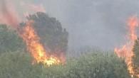 Foça'da yangın çıktı!
