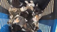 Yavru kedileri ölüme terkettiler