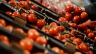 Irak domates ithalatını durduruyor
