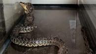 Çamaşır makinesi içinden 2 metrelik yılan çıkartıldı