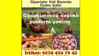 organikgezen tavuk köy yumurtası