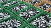 Sürdürülebilir balıkçılığın sorunları ve çözüm önerileri