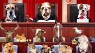 5199 Hayvanları Koruma Kanunu İyileştirilsin ve Uygulansın ! Yaşam Hakları Korunsun !