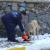 Sokak Hayvanlarına Yem Bırakıldı