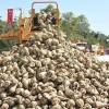 Ülkenin ganimet malları Bugün üç şeker fabrikası daha ihaleye çıkıyor