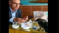 İstanbul da belediyelerin hayvanları su içecek yerleri yapmadığı için  Kuşlar lokantaların içine giriyor karnını doyuruyor ve su içmek istiyor