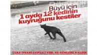 Sultangazi'de kedilerin kuyrukları kesiliyor: 'Büyü için kesildiğinden şüpheleniyoruz