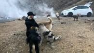 Hakkari'de görev yapan Eda öğretmen, sokak hayvanlarına sahip çıktı, hayranlık uyandırdı