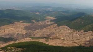 Ortaylı'dan Kaz Dağları tepkisi: Bakanlığın verdiği rakamlar gülünç
