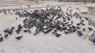 Eyüpsultan Güvercinlerinin Rızkı Antalya'dan Geldi