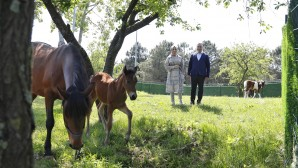 Sultangazi Belediyesi Binicilik Tesisinin 'Sultan'ı