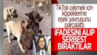 Sıpayı köpeklere parçalatan şüpheli serbest kaldı