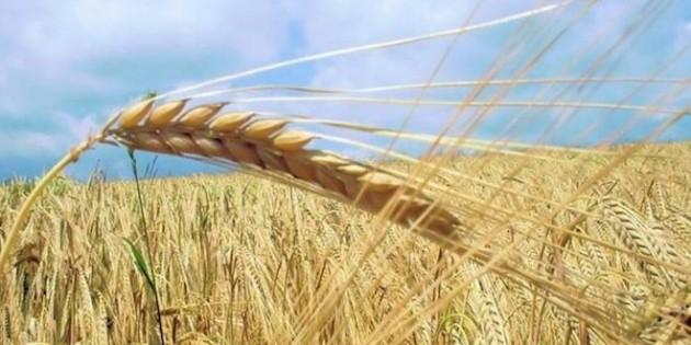 Buğday ekilen arazi azaldı, Yunanistan'dan ithalat yüzde 632 arttı