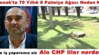 İzmir Konak'ta 70 Yıllık 8 Palmiye Ağacı Neden Kesildi?