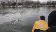Haliç'te köpek kurtarma operasyonu