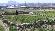 İstanbul'da sanayi ve binaların arasında köy hayatı