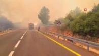 Kudüs'te ormanda büyük yangın