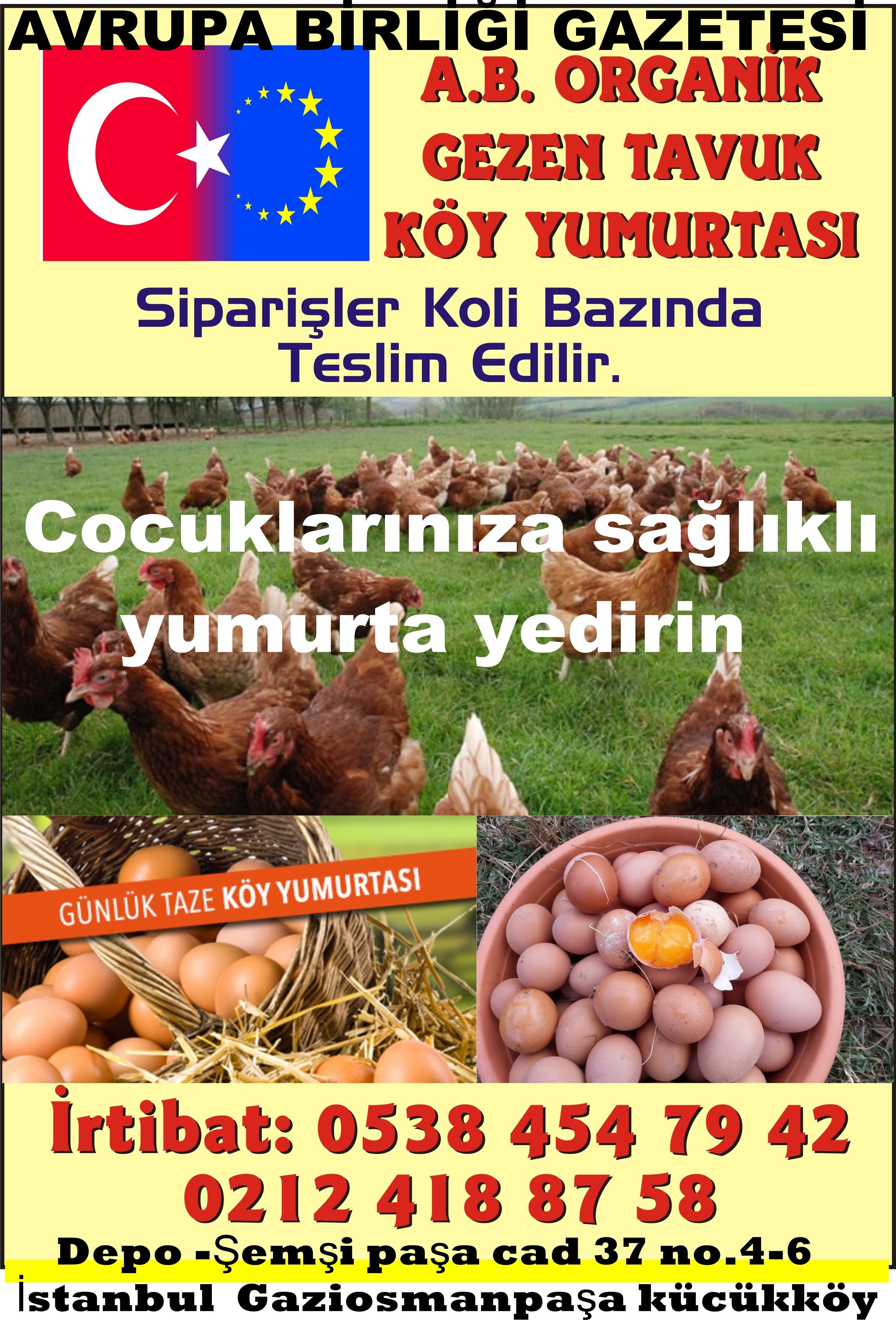 organik gezen tavuk köy yumurtası